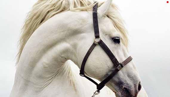 лошадиная дорога